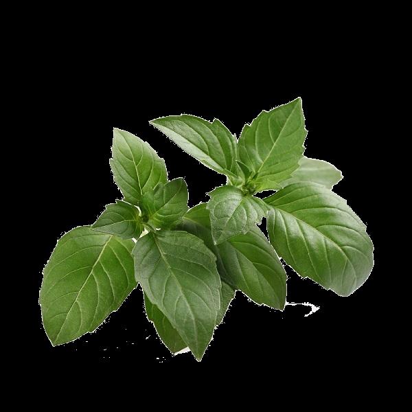 Basil Leaves, Holy (Whole)