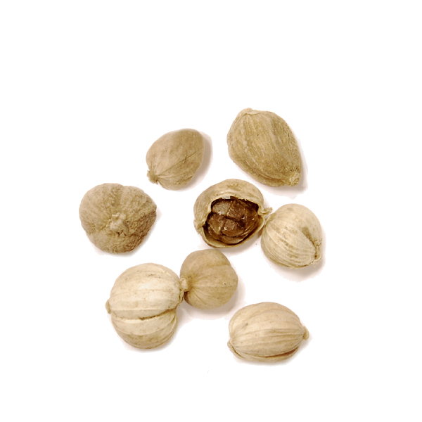 Cardamom Pods, White (Whole)